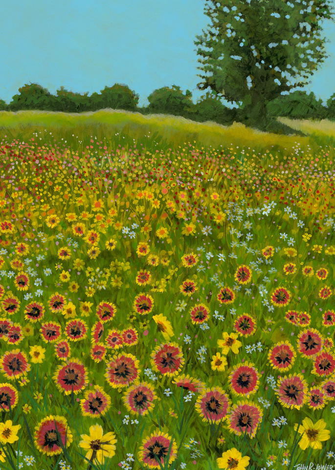 Original painting of a field of Indian Blanket wildflowers for sale as art prints.