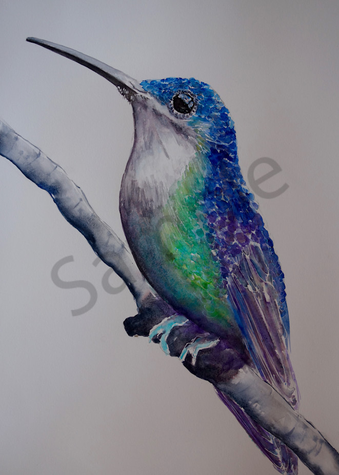 Paco the Hummingbird