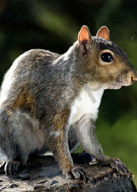 Squirrel Sitting Art | MDM photo