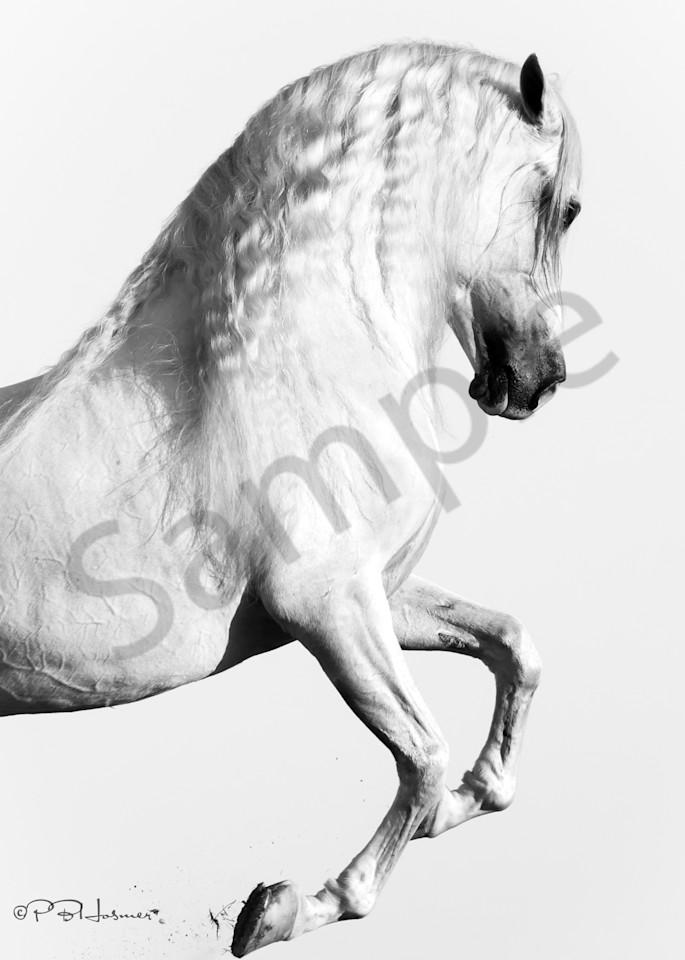 Elegant Equus Photography Art   HoofPrintsFineArt