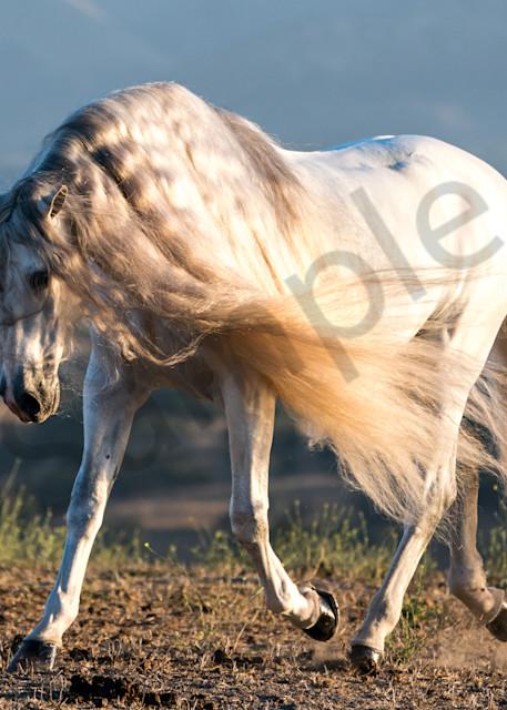 Modern Unicorn Photography Art | HoofPrintsFineArt