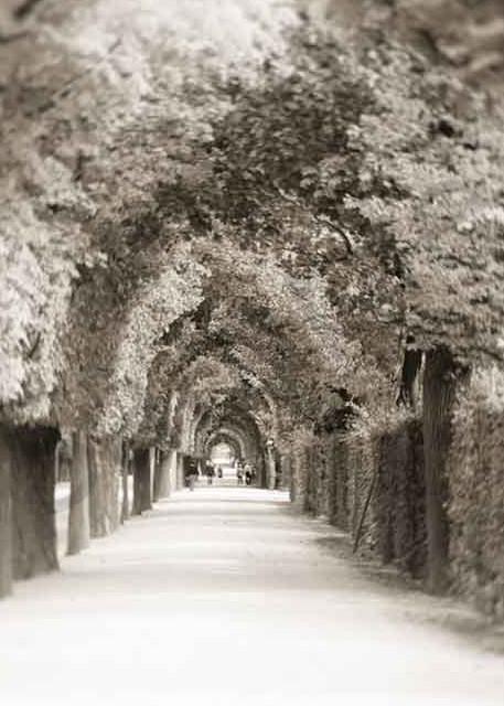 Poetic photograph of the Schönbrunn Garden as fine art print by Ivy Ho