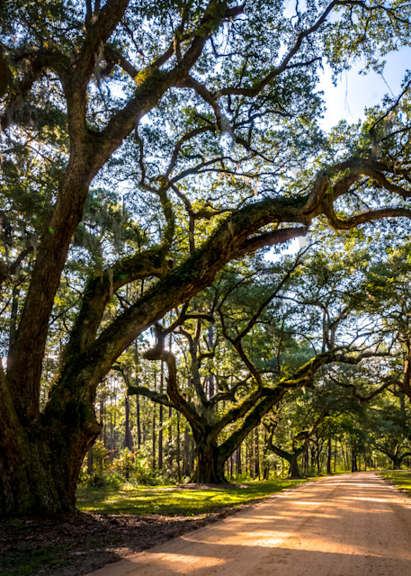 Lowcountry Oak Aveneue Photograph for Sale as Fine Art