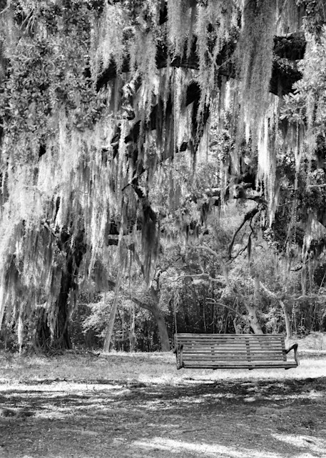 Southern Oak in Black and White Photograph for Sale as Fine Art