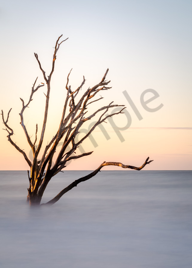 Botany Bay Tree Photograph for sale as Fine Art