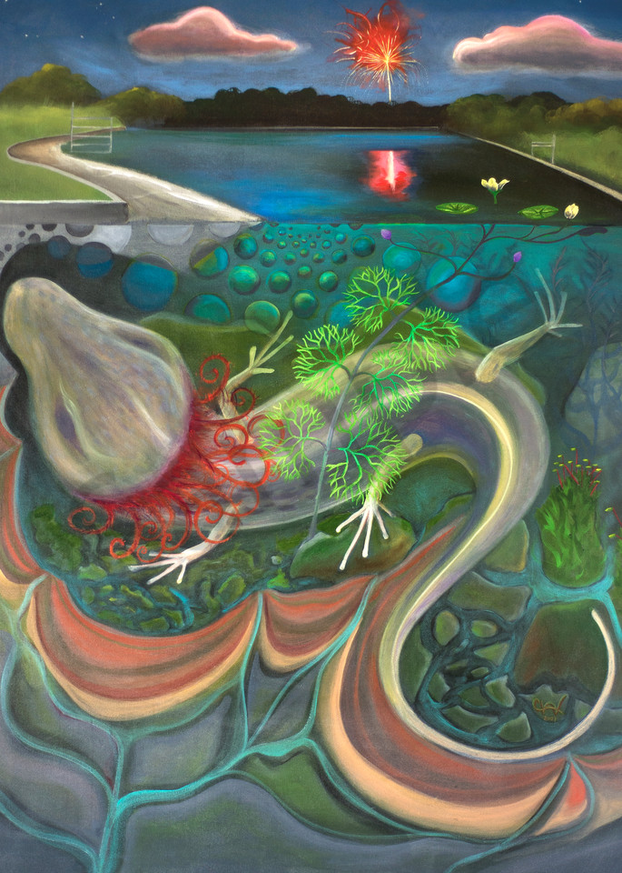 Salamander At Barton Springs Art | FireFlower Art