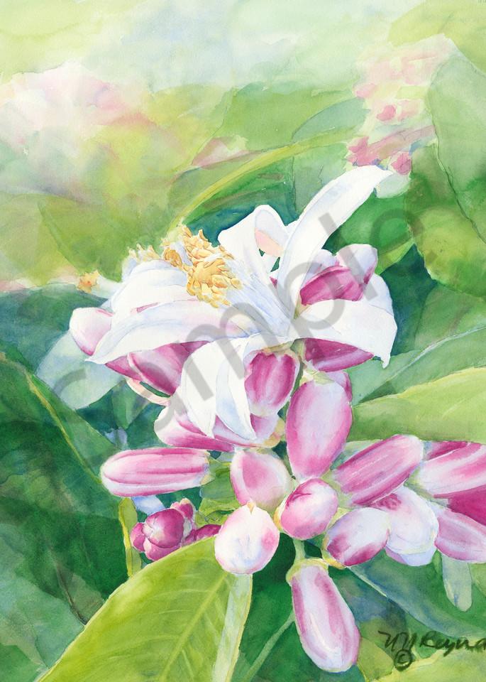 Orange Blossom Art for Sale