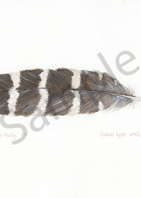 Feather Study #4 Art | Digital Arts Studio / Fine Art Marketplace