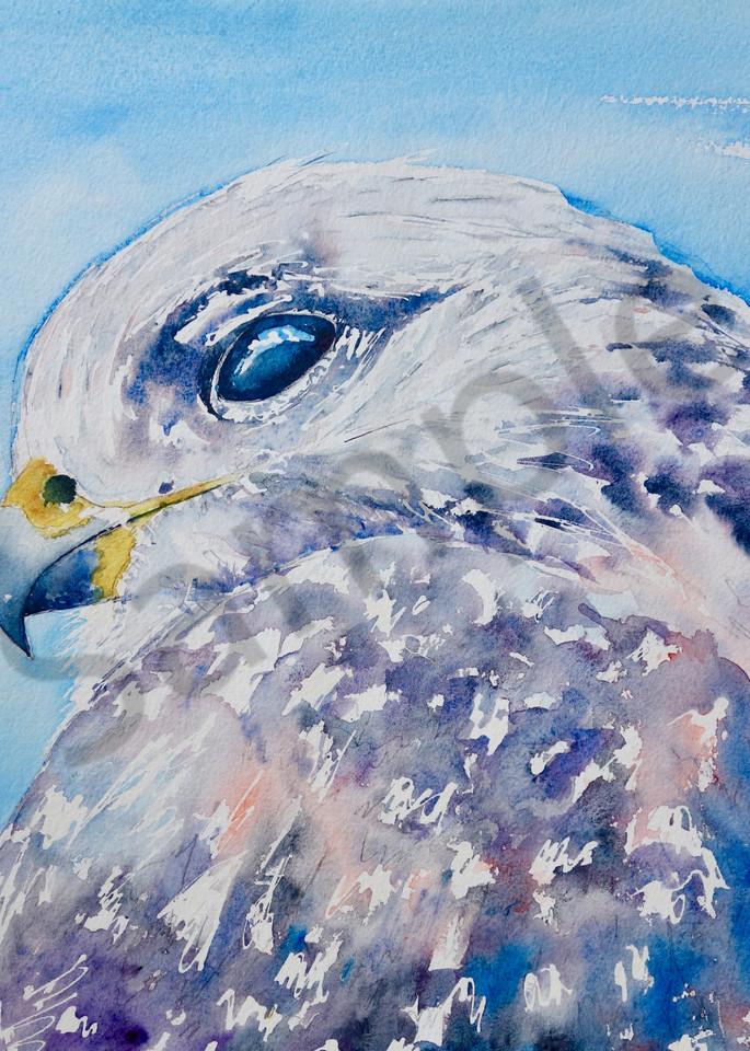Ingrid The Ferruginous Hawk Art   Amy Tigner Art