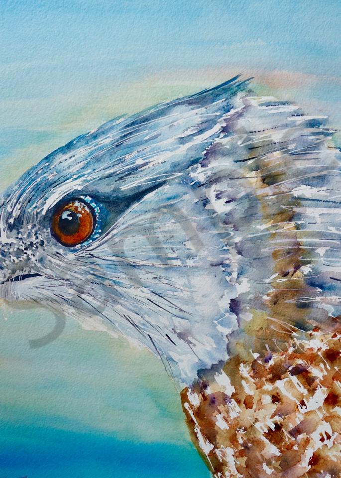 Gary The Cooper's Hawk Art | Amy Tigner Art