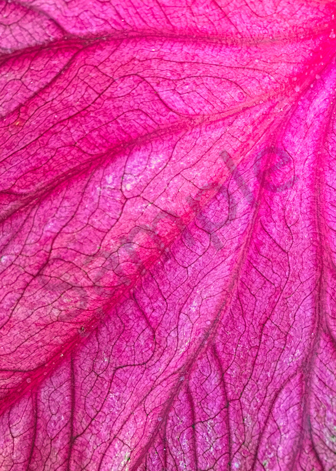 Red Leaf Arteries|Fine Art Photography by Artist Todd Breitling|Trees and Leaves|Todd Breitling Art