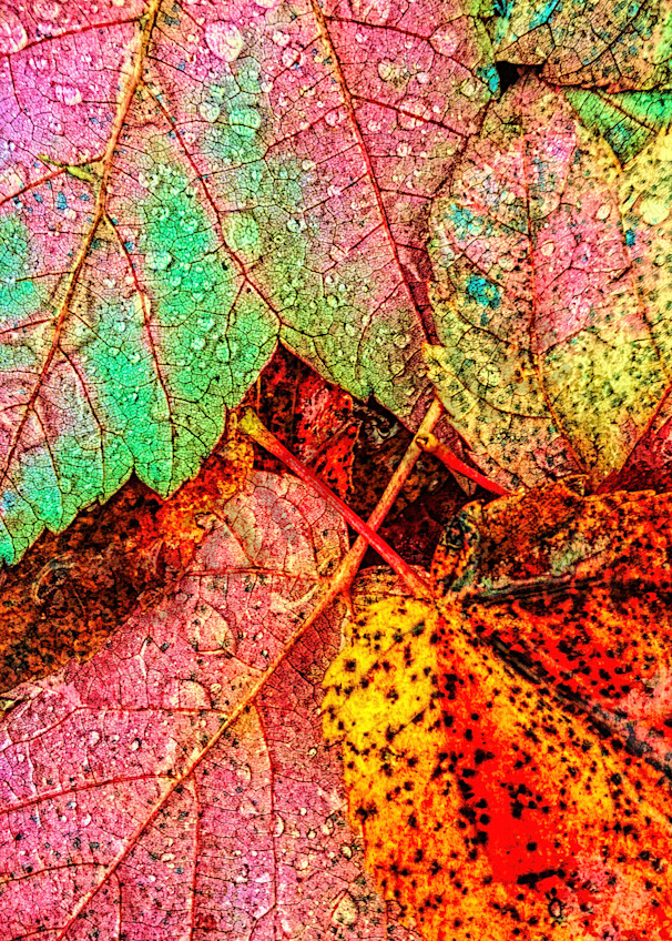 Overnight Rain Leaves|Fine Art Photography by Todd Breitling|Trees and Leaves|Todd Breitling Art