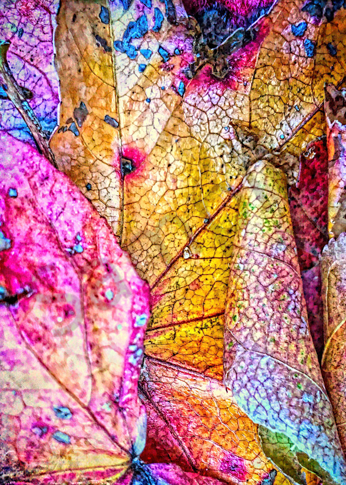Patterns From Leaves|Fine Art Photography by Todd Breitling|Trees and Leaves|Todd Breitling Art