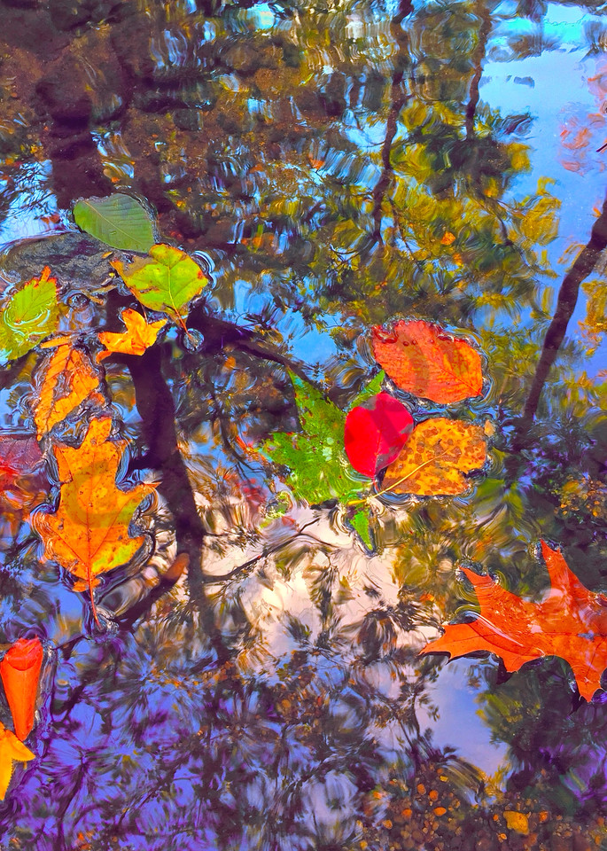 Gently Down The Stream|Fine Art Photography by Todd Breitling|Trees and Leaves|Todd Breitling Art|