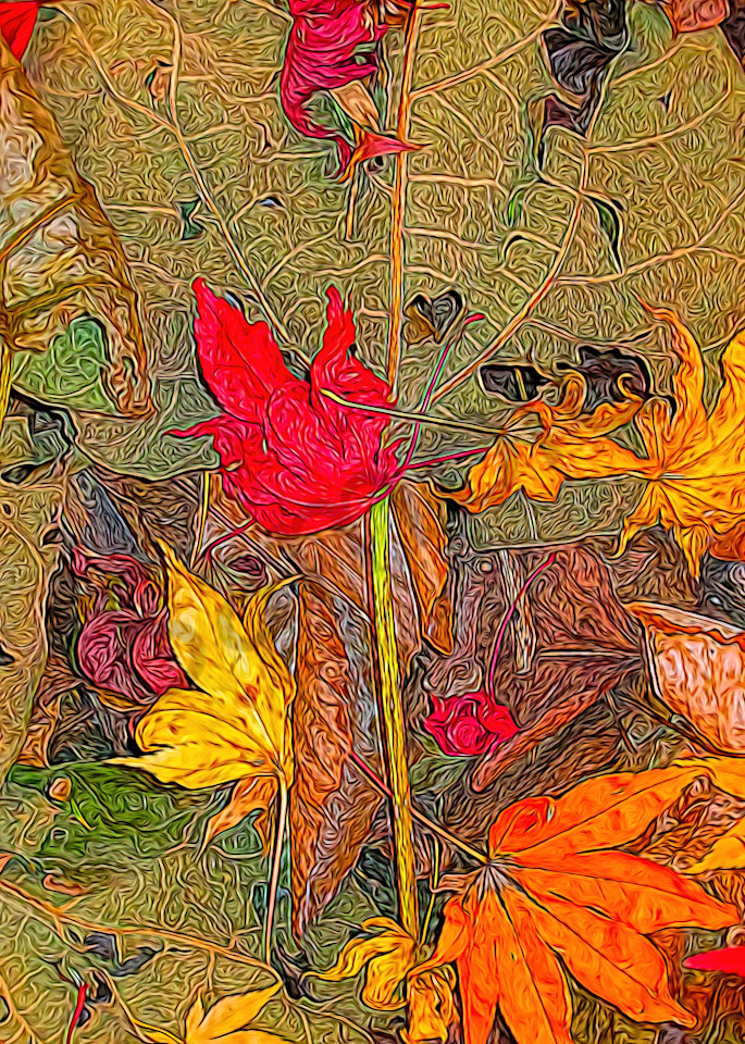 Lost and Found Leaves|Fine Art Photography by Todd Breitling|Trees and Leaves|Todd Breitling Art|