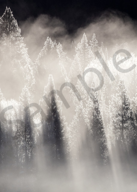 Forest Wall Art | Robbie George Photography