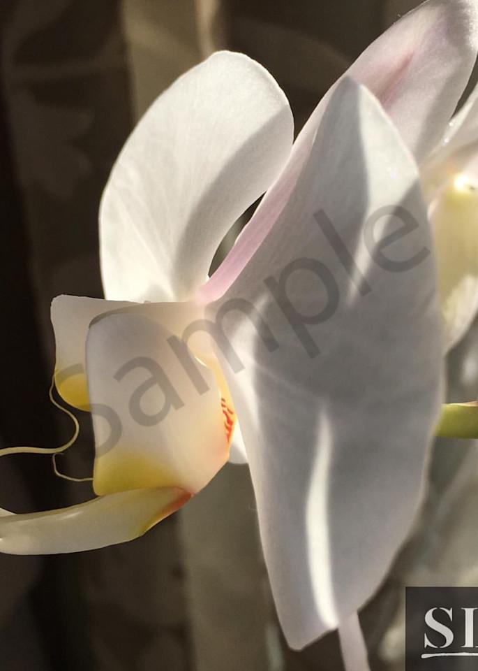 Glide Photography Art | slgparrish