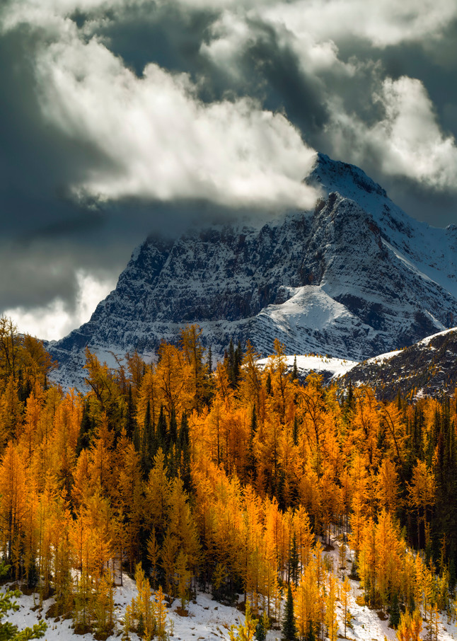 Larch Throne for The Monarch|Banff|Canadian Rockies|Rocky Mountains|