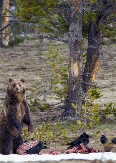 Grizzly | Robbie George Photography