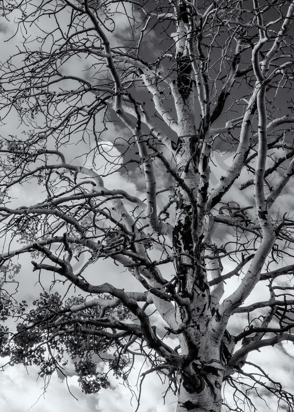 Tree  & Clouds   Boulder Mountain Utah Photography Art | Namaste Photography