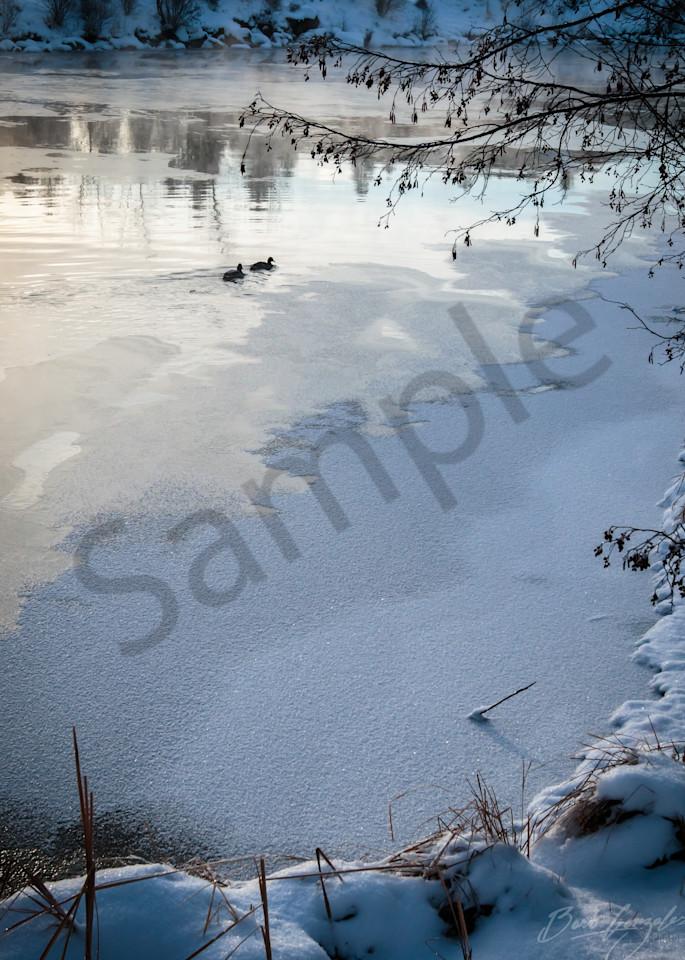 Frozenriver Ducks Oldmill Photography Art   Barb Gonzalez Photography