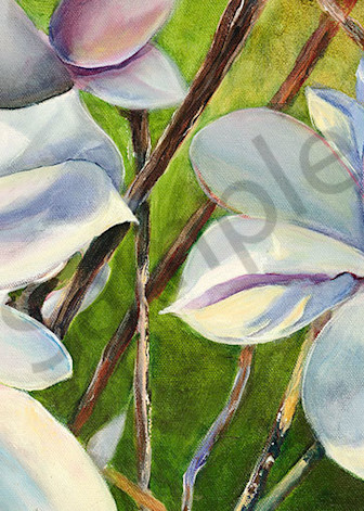 """Magnolias"" fine art print by Peter Koury."