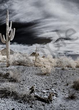 Lone Saguaro Photography Art | frednewmanphotography