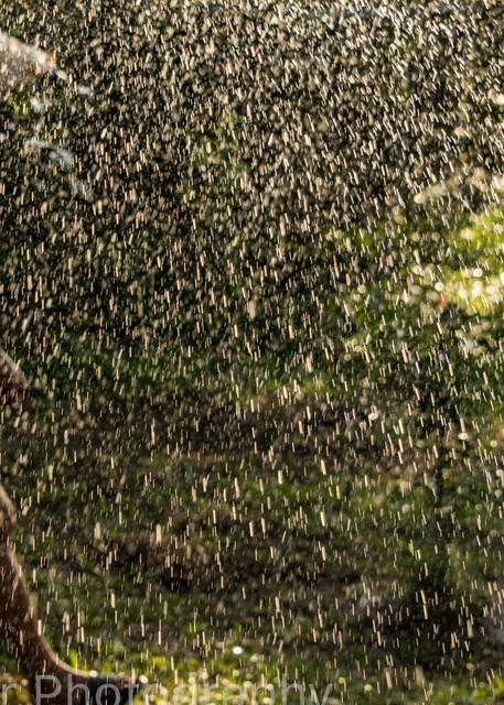 Vietnamese farmer  behind water droplets
