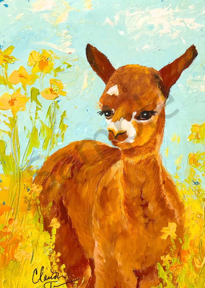 Maisy the Baby Alpaca