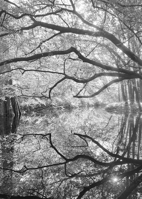 8334 Suwannee River State Park Art | Cunningham Gallery