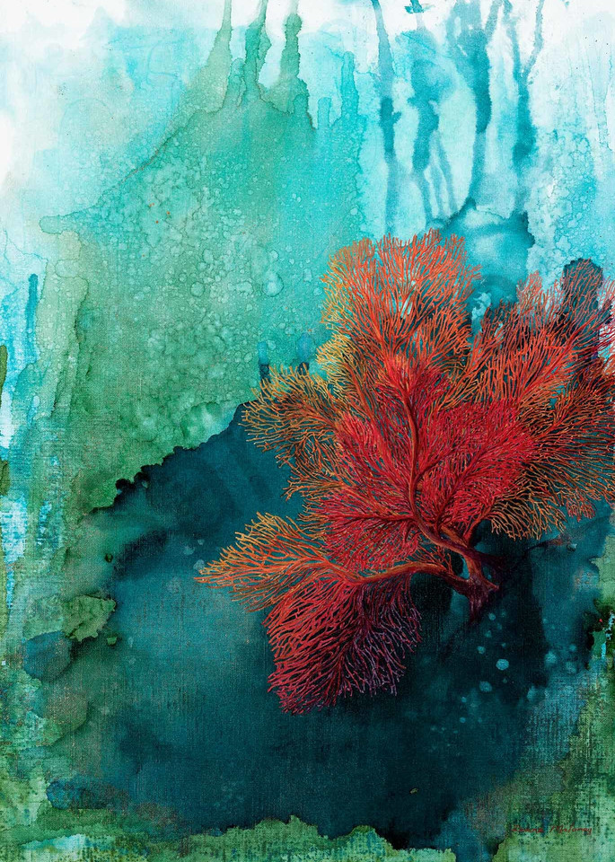 Red Coral 2