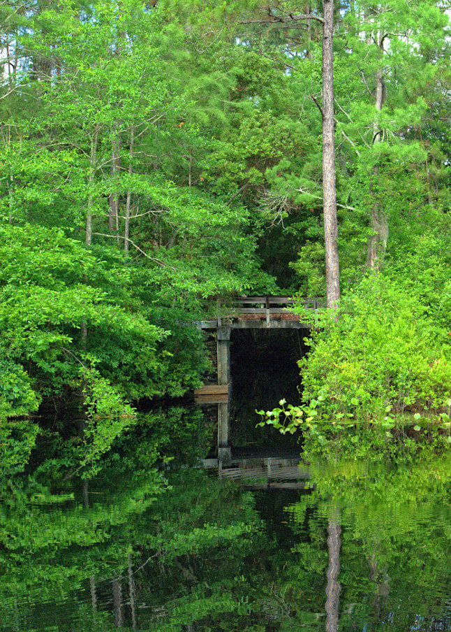 Swamp Tunnel Art   No Blink Pictures, LLC