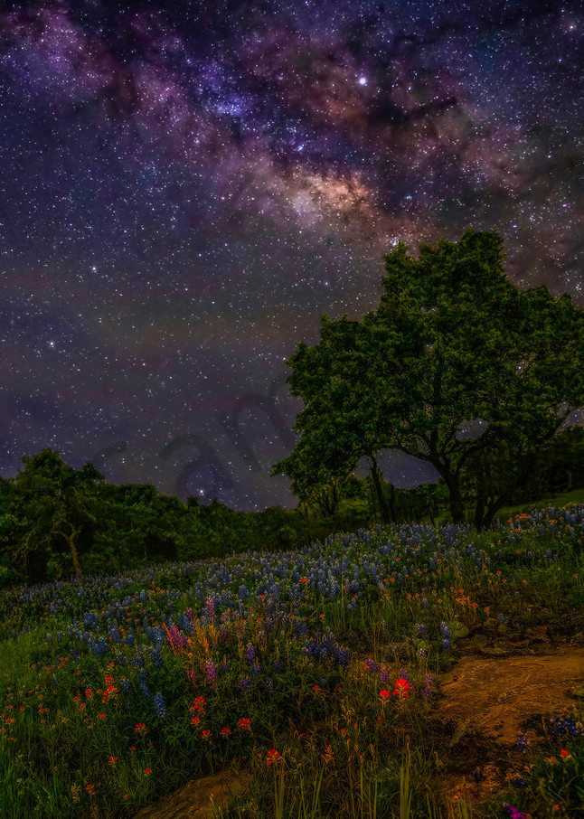 Flowers From Heaven Photography Art | John Martell Photography