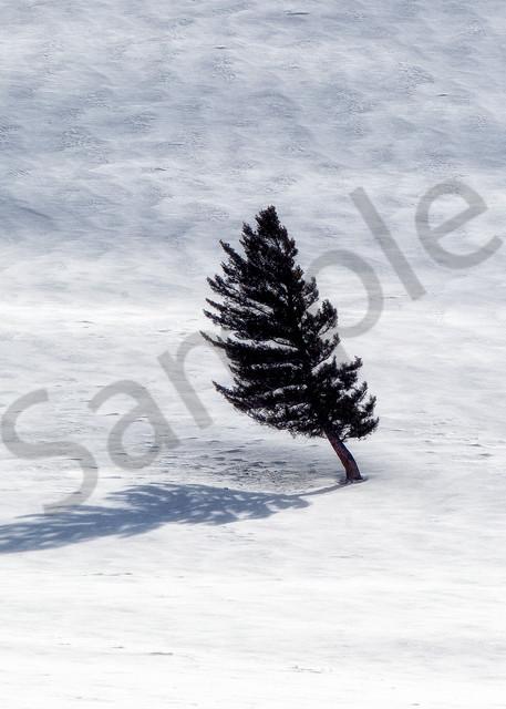 Tree | Robbie George Photography