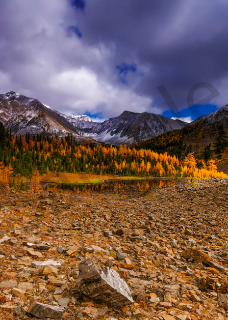 Larch trees in the afternoon sun by a small tarn in the Rockies.|Canadian Rockies|Banff National Park|Rocky Mountains|