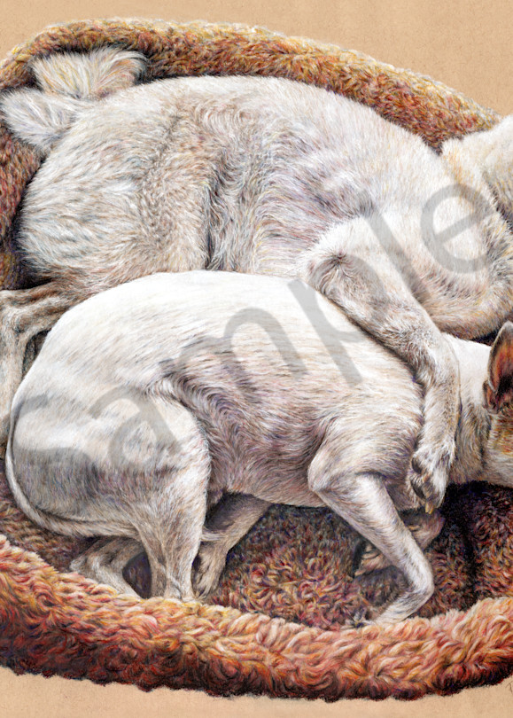Colored Pencil Drawing - Dog Bed Snuggles