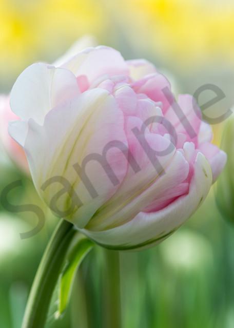 Spring Joy Photography Art | Kim Bova Photography