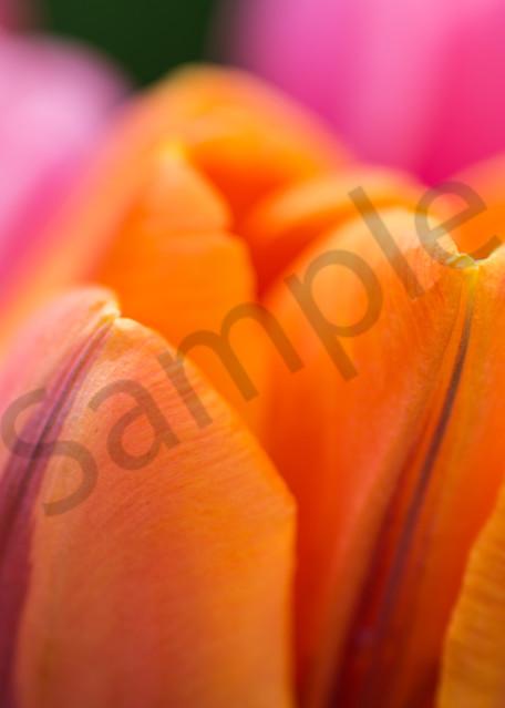 Spring Warmth Photography Art | Kim Bova Photography