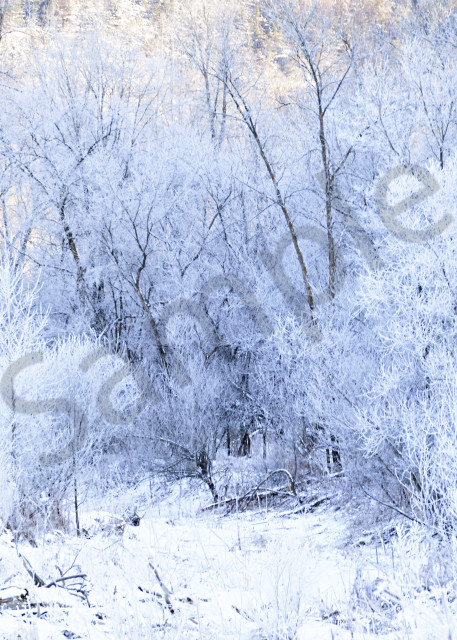 Hoar Frost Photography Art | LHR Images