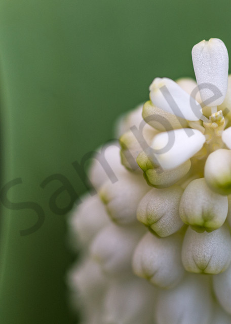 Barely White Photography Art | Kim Bova Photography