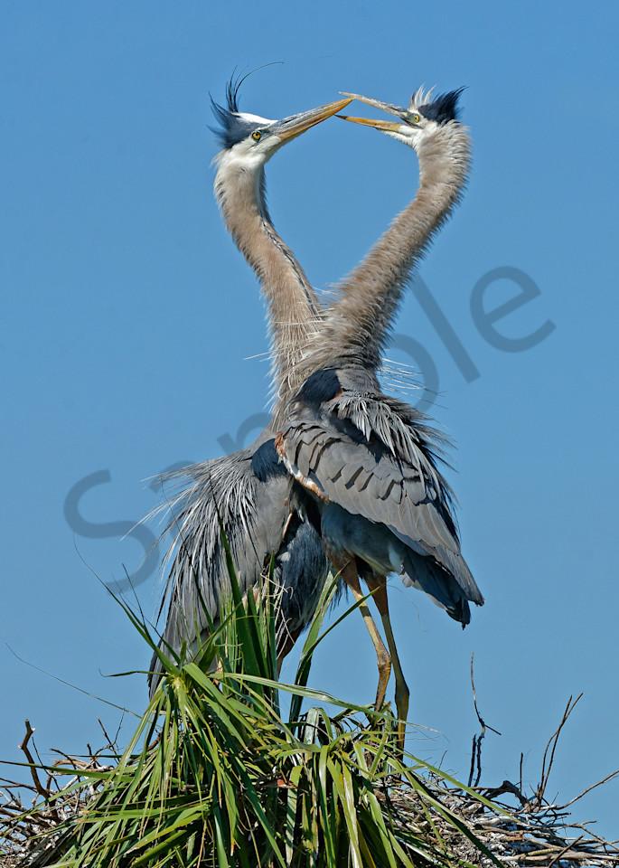 Love Herons