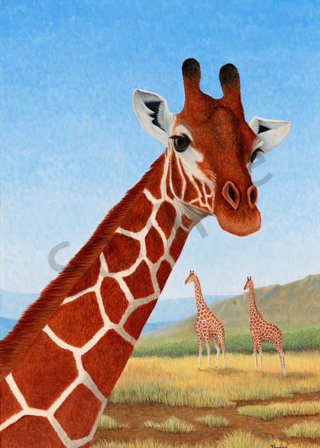 trozzo-giraffe