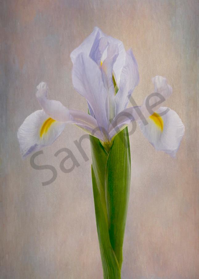 Blue Iris Art   Cincy Artwork
