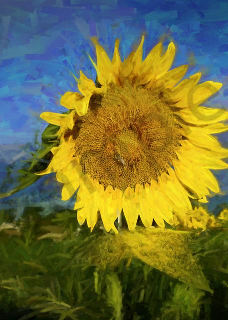 Fading Sunflowers Art | Cincy Artwork
