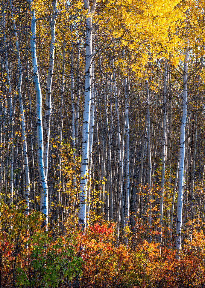 Colours Of Fall Art | Andrew Collett Photography