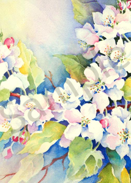 Apple Blossoms fine art print by Karen Shanahan.