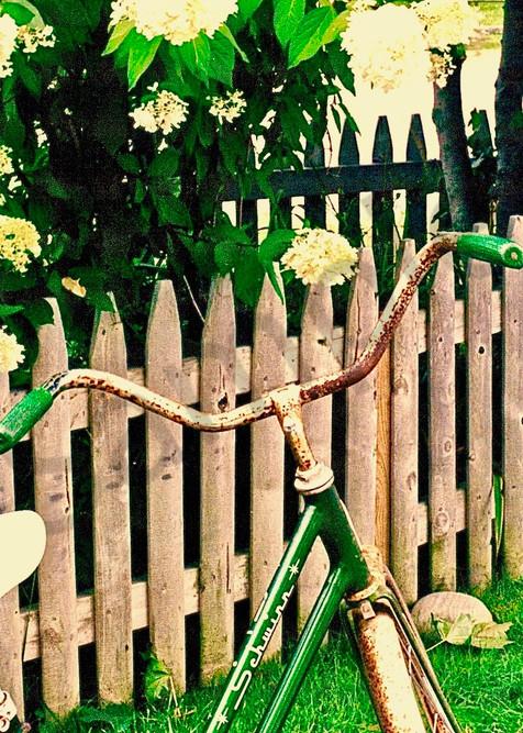 Lady's Bicycle Art   Wild Ponies creations