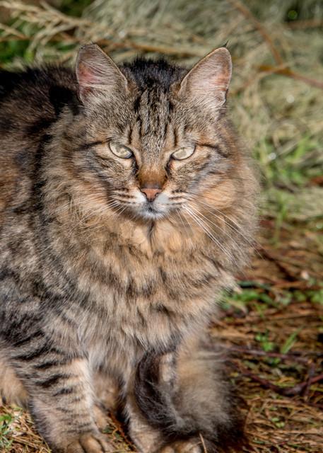 Street cat Israel