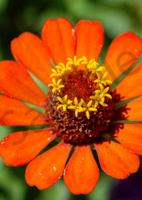 Orange flower Costa Rica
