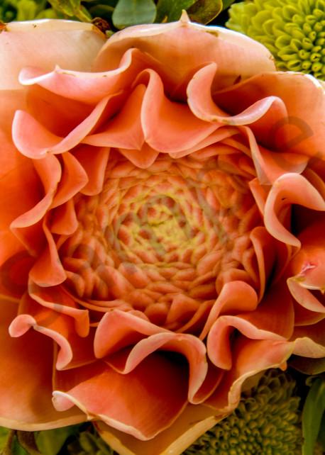 Philippines exotic flower
